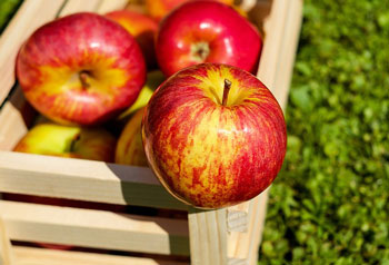 apple-1589874_350