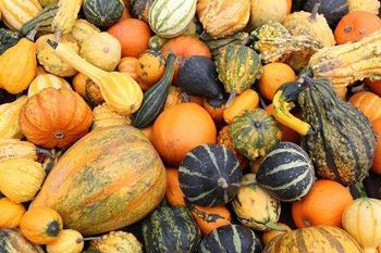 pumpkin-2805940_350